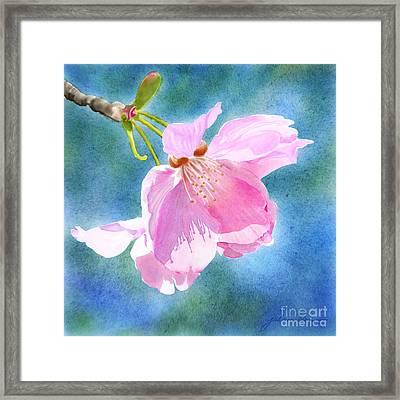 Apple Blossom On Blue Framed Print