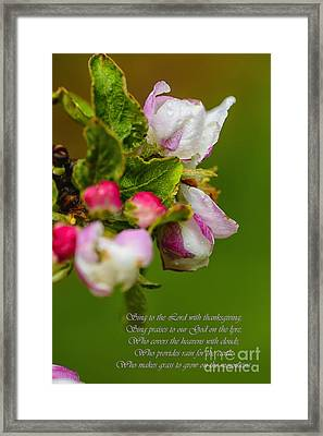 Apple Blossom Raindrops Framed Print by Thomas R Fletcher