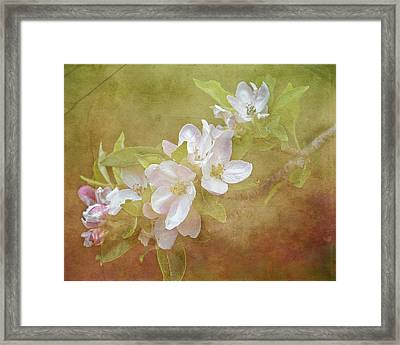 Apple Blossom Spring Framed Print