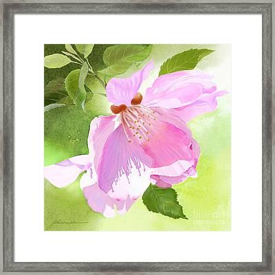 Apple Blossom Three Framed Print
