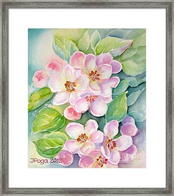 Apple Blossoms 1 Framed Print