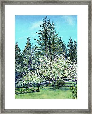 Framed Print featuring the painting Apple Blossoms And Redwoods by Asha Carolyn Young