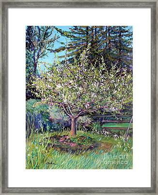 Apple Blossoms And Spring Flowers Framed Print by Asha Carolyn Young