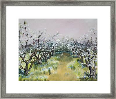 Apple Blossoms In Ellijay -apple Trees - Blooming Framed Print