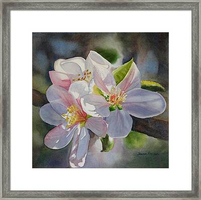 Apple Blossoms In Sunlight Framed Print