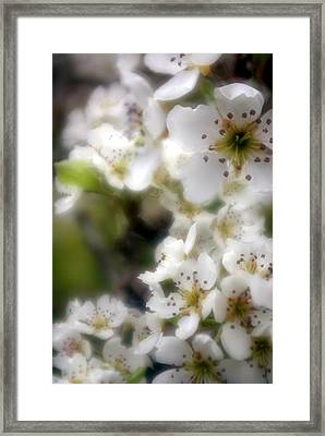 Apple Blossoms Framed Print by Ken Dietz