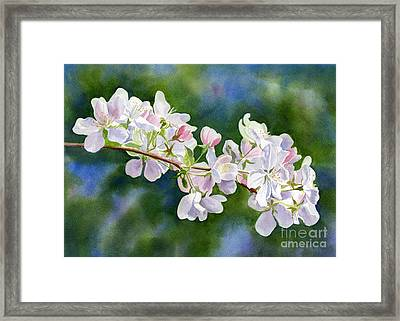 Apple Blossoms With Blue Green Background Framed Print