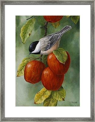 Apple Chickadee Greeting Card 3 Framed Print by Crista Forest