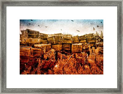 Apple Crates And Crows Framed Print by Bob Orsillo
