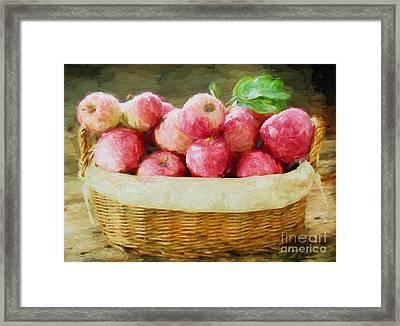 Apple Harvest Framed Print by Darren Fisher