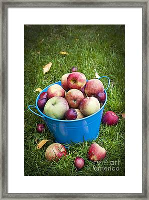 Apple Harvest Framed Print by Elena Elisseeva