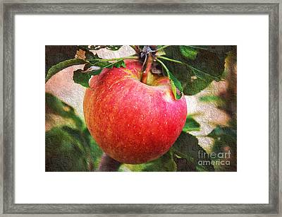 Apple On The Tree Framed Print by Andee Design