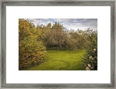 Apple Orchard Framed Print by Amanda Elwell