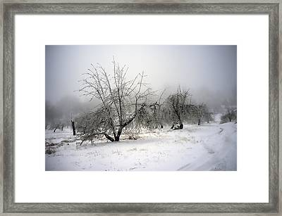 Apple Orchard Framed Print by Hugh Smith