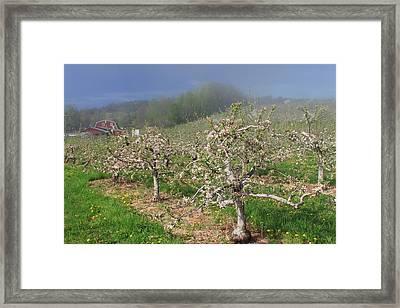 Apple Orchard In Spring Framed Print by John Burk