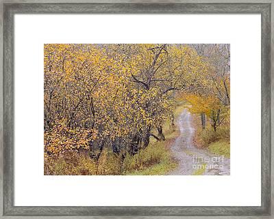 Apple Orchard Road Framed Print by Alan L Graham