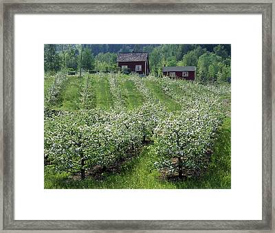 Apple Orchard Framed Print by Science Photo Library