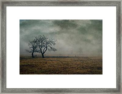 Apple Orchard - Storm Impression Framed Print by Geoffrey Coelho