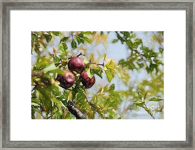 Apple Pickin' Time Framed Print by Lois Bryan