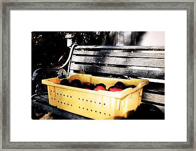 Framed Print featuring the photograph Apple Picking by Meaghan Troup