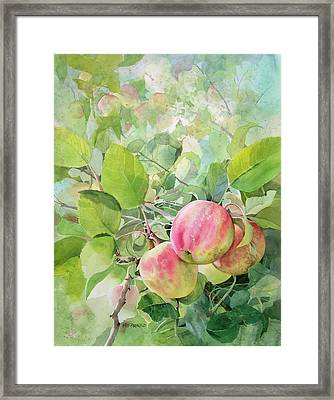 Apple Pie Framed Print by Kris Parins