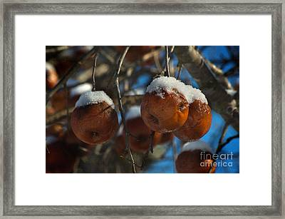 Apple Sorbet Framed Print by The Stone Age