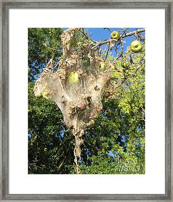 Framed Print featuring the photograph Apple Trap by Carol Lynn Coronios