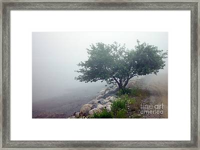 Apple Tree And Daisies Framed Print by Christopher Mace