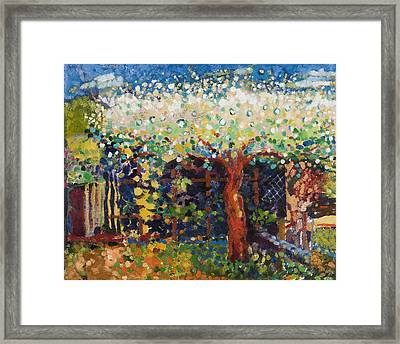 Apple Tree Blossom Framed Print by Marco Cazzulini
