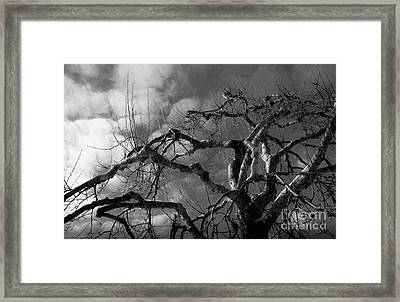 Apple Tree Bw Framed Print