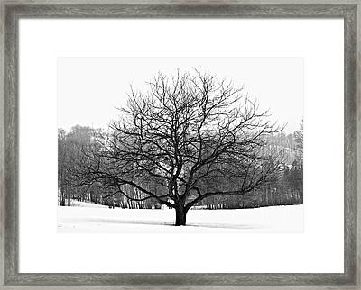 Apple Tree In Winter Framed Print by Elena Elisseeva