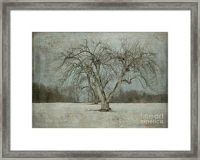 Framed Print featuring the photograph Apple Tree In Winter by Vicki DeVico