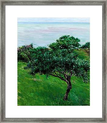 Apple Trees By The Sea Trouville Framed Print by Gustave Caillebotte