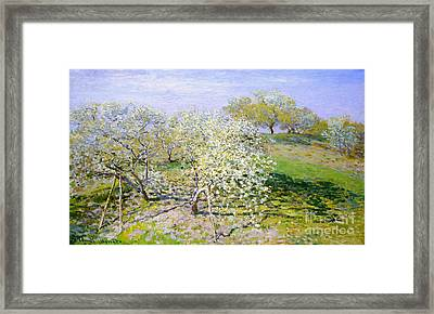 Apple Trees In Bloom 1873 Framed Print by Claude Monet