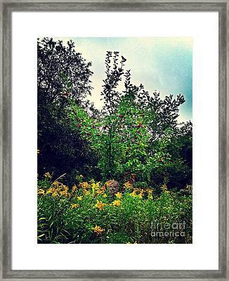 Apples And Hornets 2 Framed Print by Garren Zanker