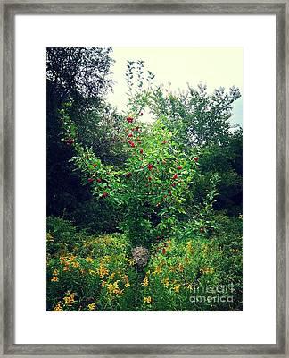 Apples And Hornets Framed Print by Garren Zanker