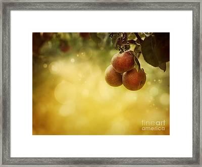 Apples Background Framed Print