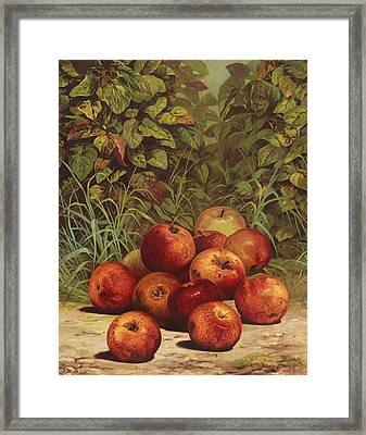 Apples Circa 1868 Framed Print by Aged Pixel