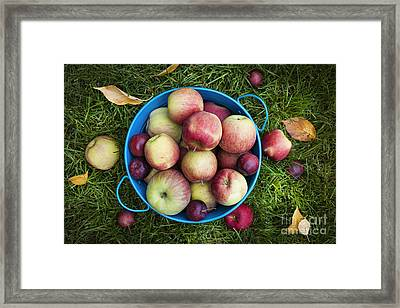Apples Framed Print by Elena Elisseeva