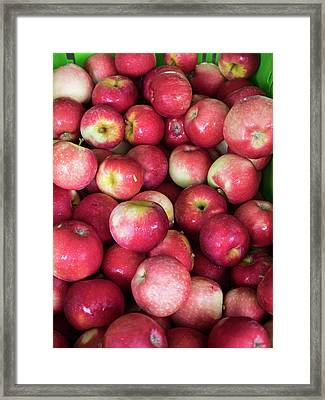 Apples For Sale At Street Market Framed Print by Panoramic Images