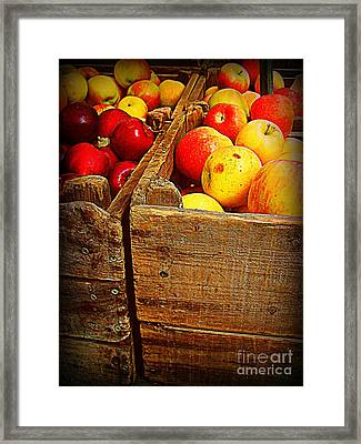 Apples In Old Bin Framed Print by Miriam Danar