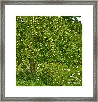 Apples In The Wild Framed Print