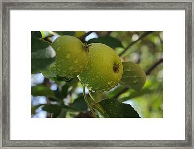 Apples Framed Print by Leon Hollins III