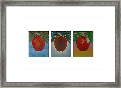 Apples Triptych Framed Print by Don Young