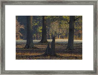 Appleton Trees Framed Print by David Stone