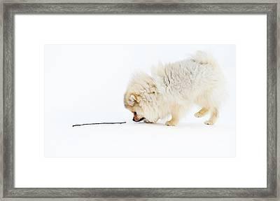 Apport Framed Print by Jenny Rainbow