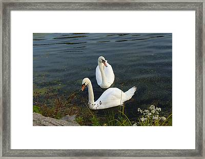 Framed Print featuring the photograph Appreciation Of Love by Lingfai Leung