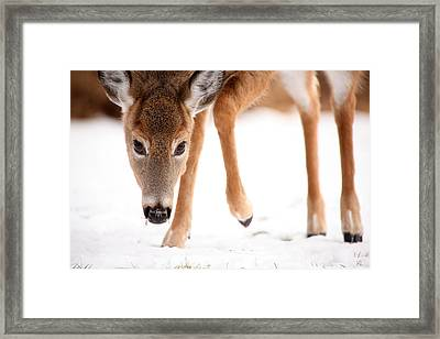 Approaching Framed Print by Karol Livote