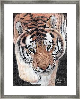 Approaching Tiger Framed Print by Audrey Van Tassell
