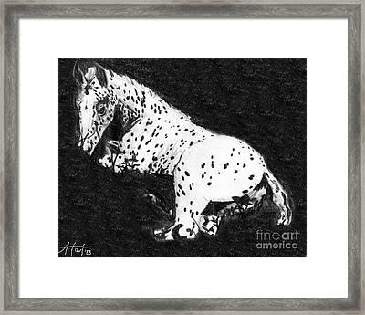 Appy Foal In Clover Framed Print